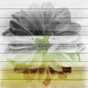 Parvez Taj Bloom Art Print on White Pine Wood