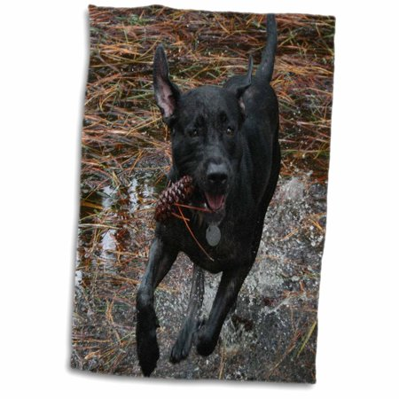 3dRose Black lab dog running through water with pinecone - Towel, 15 by 22-inch Pinecone Lodge Bath Towel