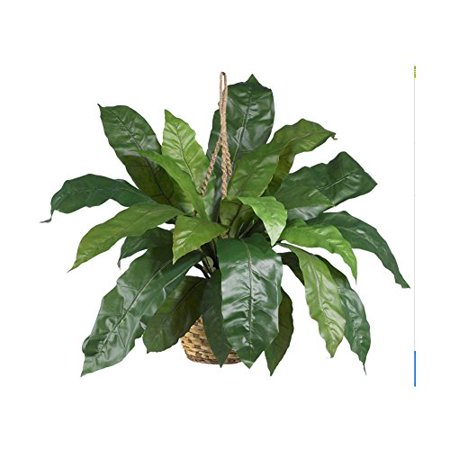 Large Birds Nest Fern Hanging Basket Fake - Fake Beards For Sale