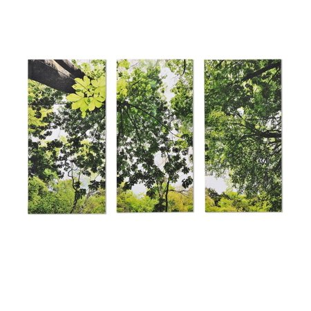 Set Of 3 24  Trees In A Forest Skyward Photograph Canvas Wall Art Prints