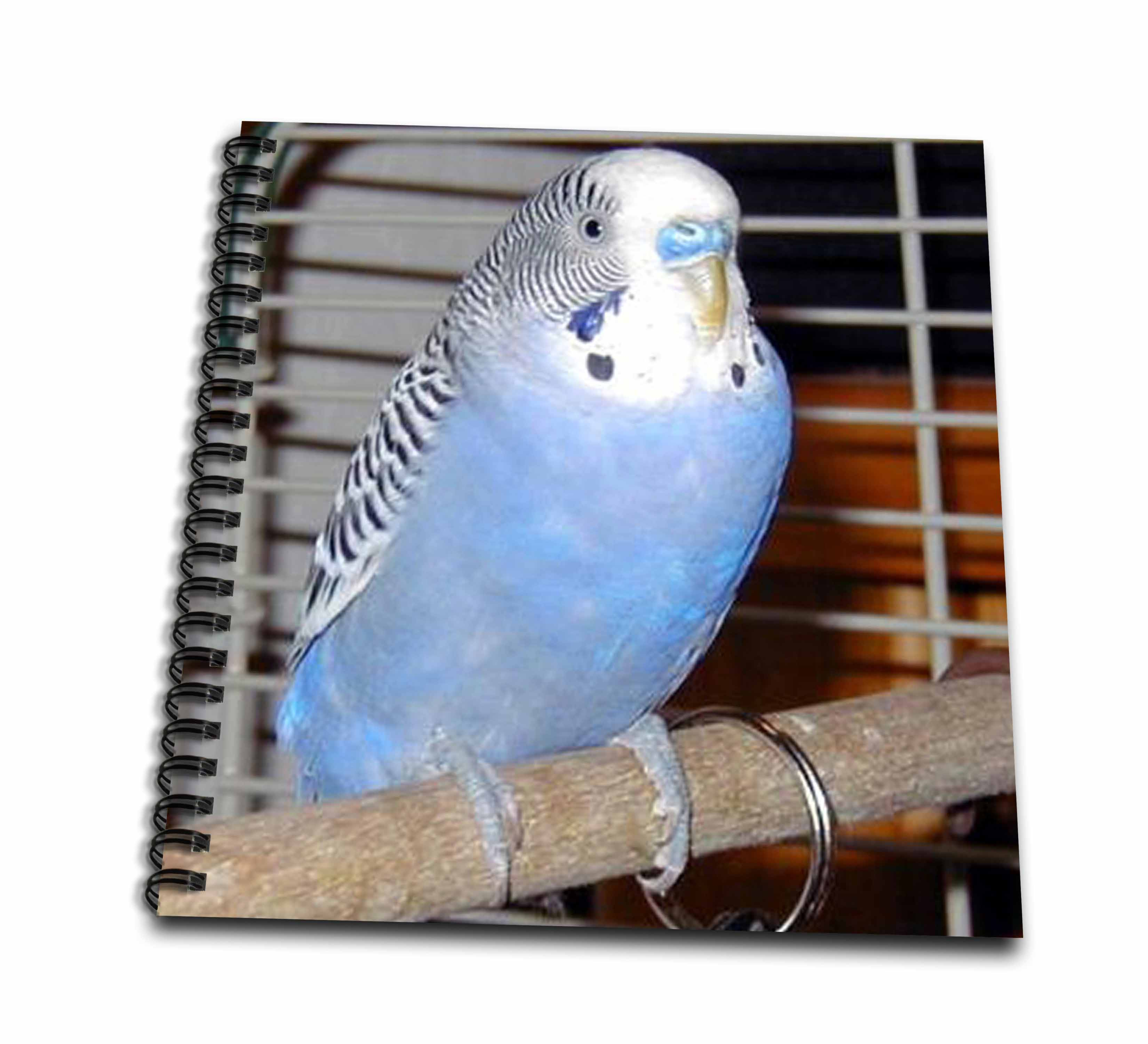 3dRose Blue Parakeet - Memory Book, 12 by 12-inch (db_983_2)