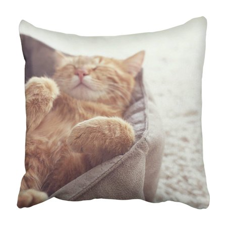 Ginger Bed Cover - ARTJIA A ginger cat sleeps in his soft cozy bed Pillowcase Throw Pillow Cover Case 16x16 inches