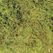 Zoo Med Natural Terrarium Moss Substrate, Medium