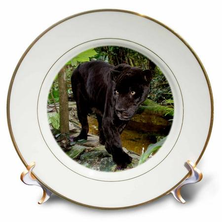 3dRose Belize, Belize City, Belize City Zoo. Black panther, Captive., Porcelain Plate, - Zoo Plates