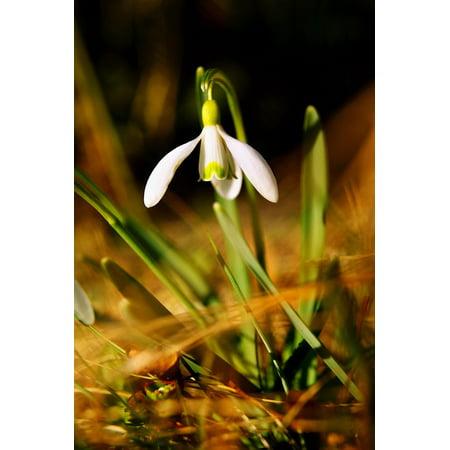 Spring White Flower Flower Poster Print 24 x 36