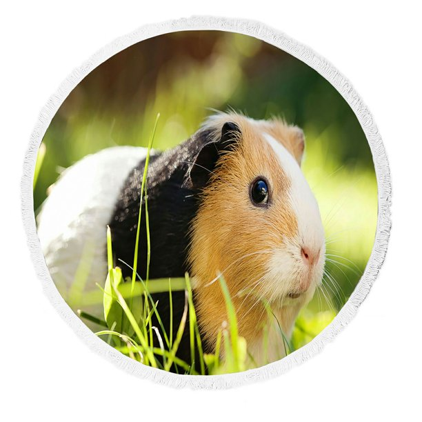 Abphqto Guinea Pig Household Pet Round, Can You Use Microfiber Towels For Guinea Pig Bedding