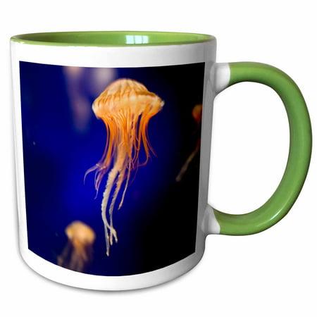 3dRose Sea Nettle, Monterey Bay Aquarium, California - US05 JGS0147 - Jim Goldstein - Two Tone Green Mug, 11-ounce