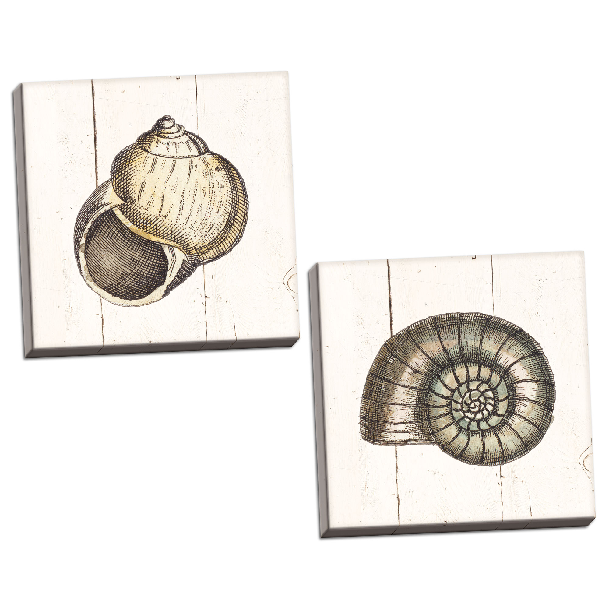 Gango Home Decor Coastal Shell Sketches Shiplap I & II by Wild Apple Portfolio (Ready to Hang); Two 16x16in Hand-Stretched Canvases