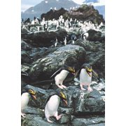 Crested Penguins Blank Book Lined Journal (4x6)