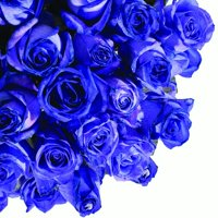 """Natural Fresh Flowers - Tinted Purple Roses, 20"""", 50 Stems"""