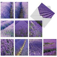 10 Blank Note Cards with Envelopes (4 x 5.12 Inch) - Assortment of Purple Lavender Fields, Boxed Set M2017