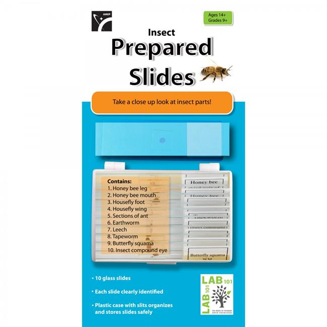 American Educational 7-1352-RT Prepared Slides Insects - Pack of 10