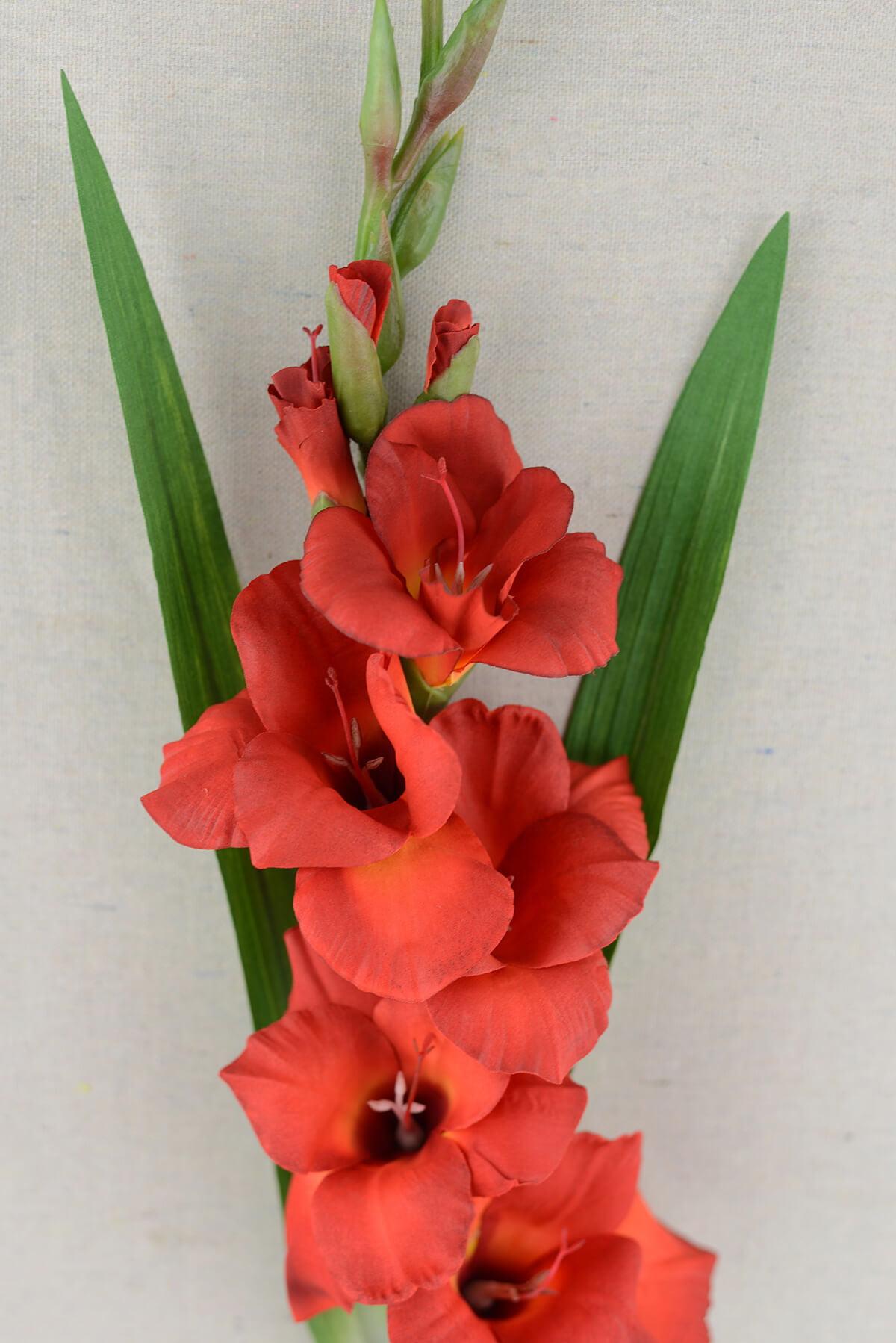 Gladiolus Flower Red 33 Inches Walmartcom