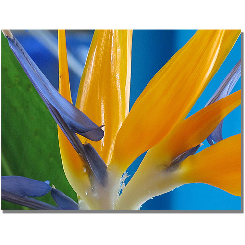 "Trademark Art ""Bird of Paradise"" Canvas Wall Art by Kathie McCurdy"