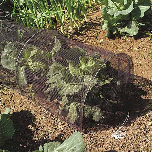 Netting Grow Tunnel Pests Protector