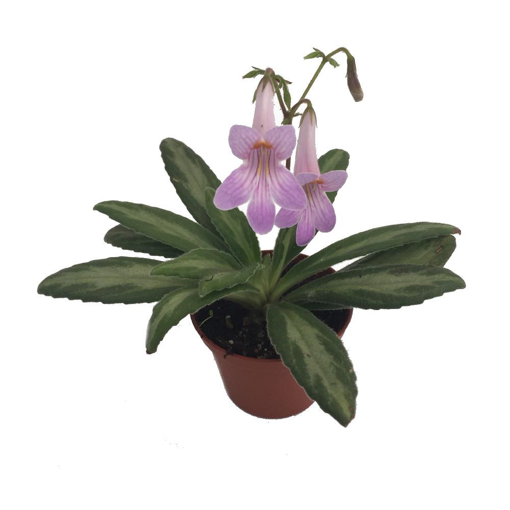 Asian plant pot