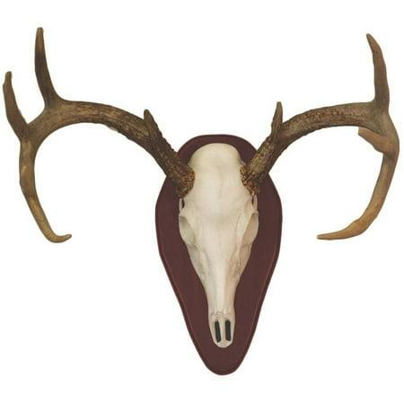 Hunter's Specialties European Half Skull Antler Mounting Kit