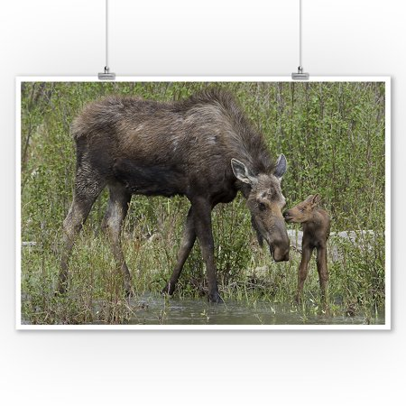 Mother Moose and Baby - Lantern Press Photography (James T. Jones) (9x12 Art Print, Wall Decor Travel Poster)