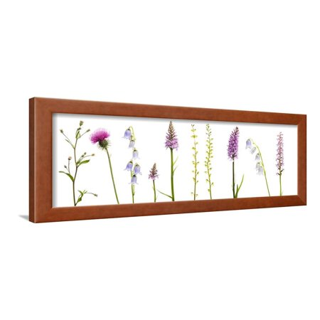 Meadow Flowers, Fleabane Thistle, Bearded Bellfower, Common Spotted Orchid, Twayblade, Austria Framed Print Wall Art By Benvie Common Spotted Orchid