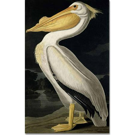 "Trademark Fine Art ""American White Pelican"" Canvas Art by John James Audubon"