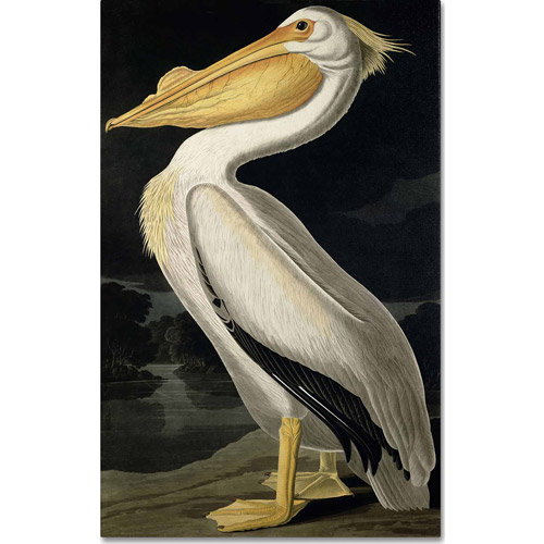 "Trademark Fine Art ""American White Pelican"" Canvas Art by John James Audubon"
