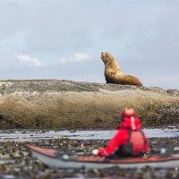 Washington, Woman Sea Kayaker, with Bull Stellar Sea Lion on Offshore Rock Near Tatoosh Island Print Wall Art By Gary Luhm