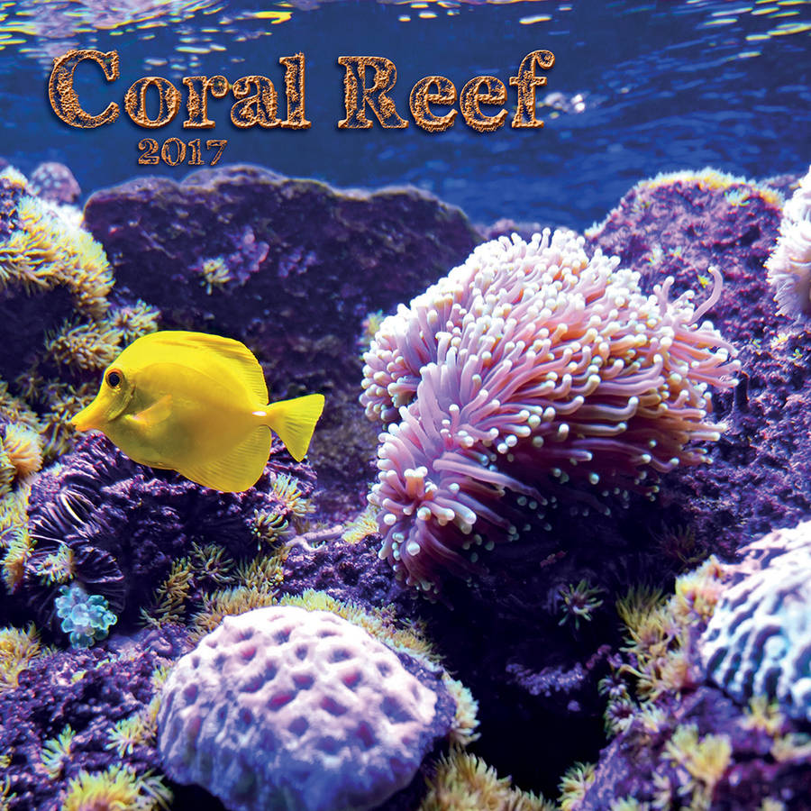 Turner Photographic 2017 Mini Wall Calendar, Coral Reef