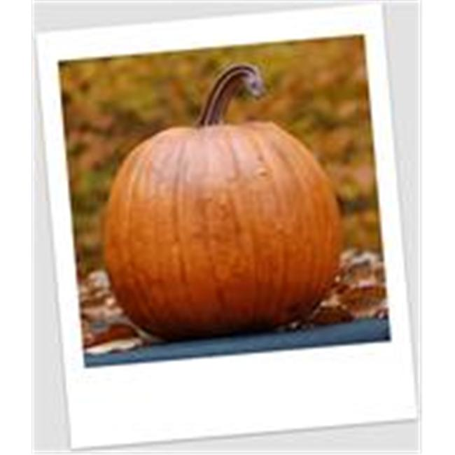 Craft-Tex PUM 2 Classic Pumpkin Fall Harvest