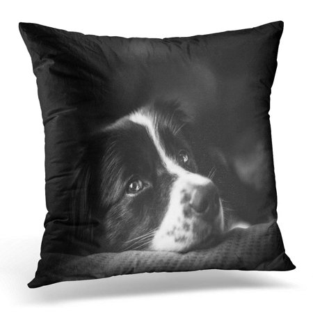 ECCOT Mix Emotion Down Black and White Border Collie Adult Pillowcase Pillow Cover Cushion Case 20x20 (Black White Border Collie)