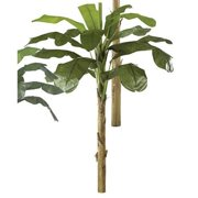 Autograph Foliages P-0771 - 9 Foot Banana Palm - Green