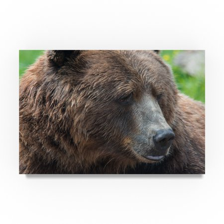 Trademark Fine Art Robert Michaud 'Brown Bear' Canvas Art