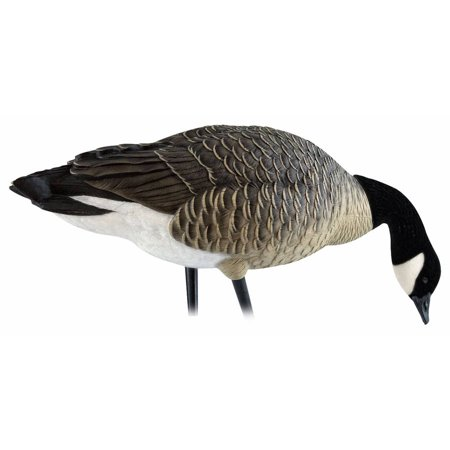 Avian-X AXP Lesser Canada Goose Decoy (Bigfoot Upright Goose Decoy)