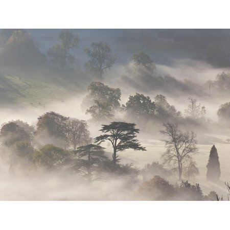 Trees in Early Morning Mist, Cotswolds, England Print Wall Art By Peter Adams