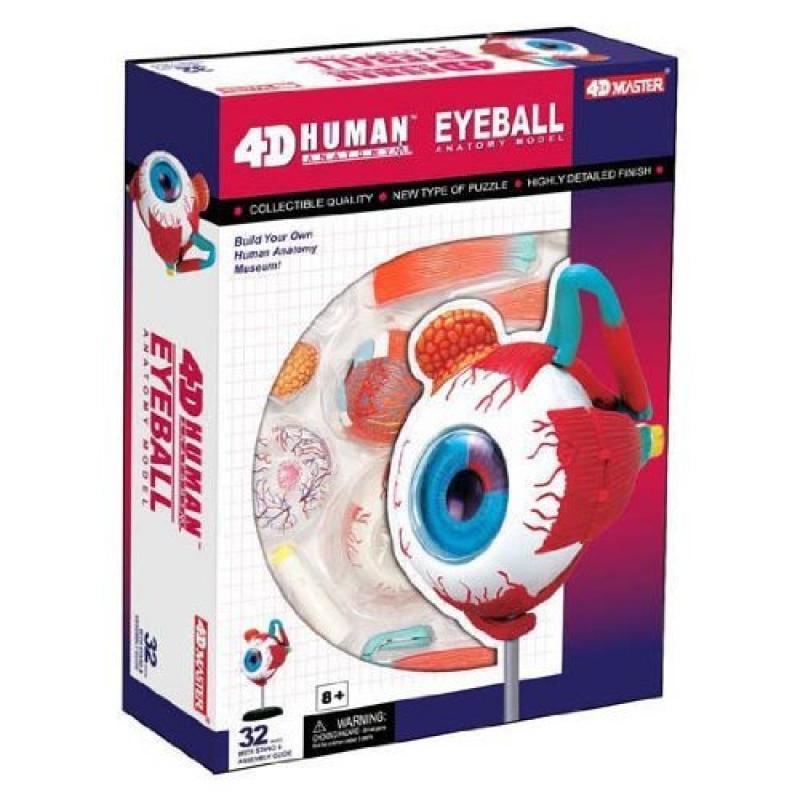 HANSEN 4D Human Eyeball Anatomy Model