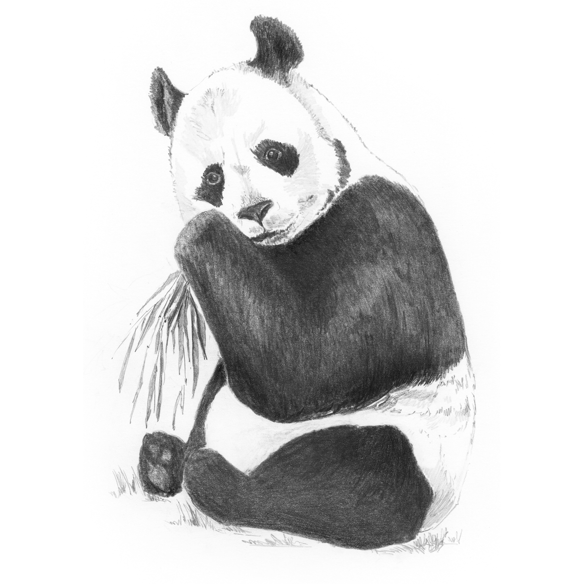"""Sketching Made Easy Kit 5""""X7""""-Panda"""