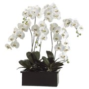 Tori Home Phalaenopsis Orchid Plant in Ceramic Pot