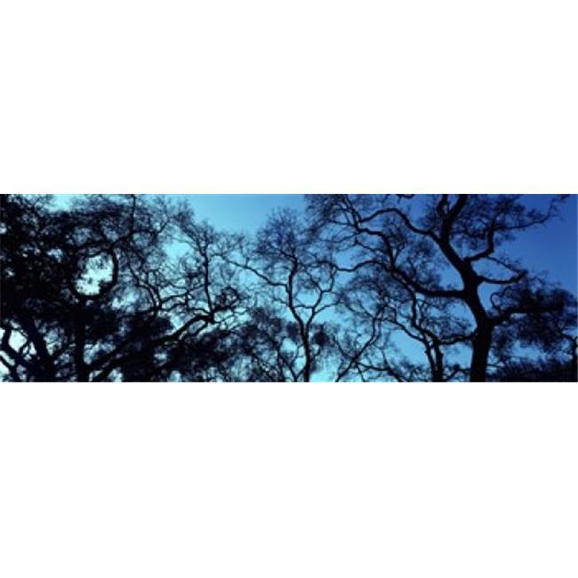 Images panoramiques PPI92208L Silhouette d'un arbre de ch-ne Oakland Californie d'affiche par images panoramiques - 36 x 12 - image 1 de 1