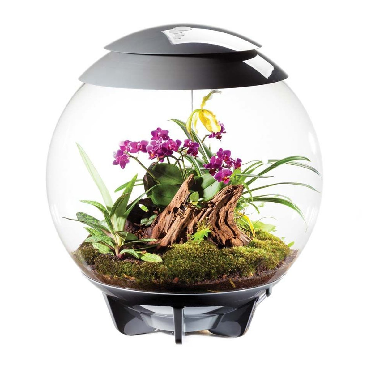 White biOrbAIR Terrarium by biOrb