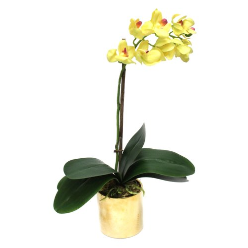 Dalmarko Designs Orchid in Vase