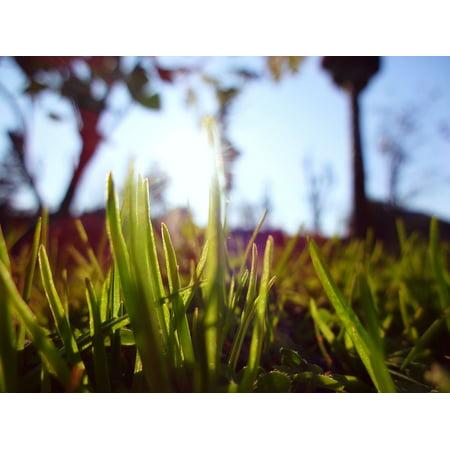 LAMINATED POSTER Garden Bright Green Natural Grass Summer Macro Poster Print 24 x 36 Natural Bright Green