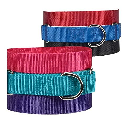 Asst Color Bulk Martingale Dog Collars Shelter Rescue Litter Pick Size Quantity by Unbranded