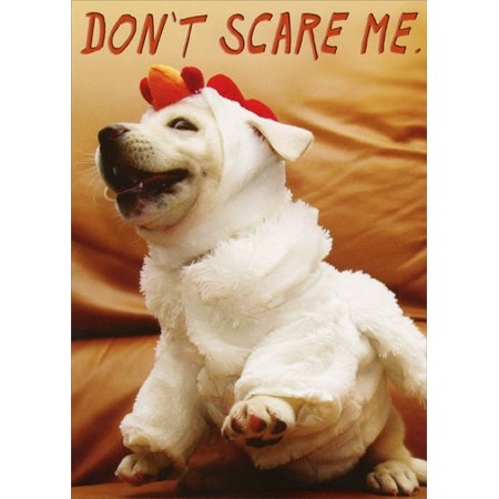 Recycled Paper Greetings Don't Scare Me Dog Funny Halloween Card for $<!---->