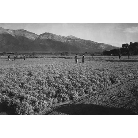 Six men standing in a field mountains in the background  Ansel Easton Adams was an American photographer best known for his black-and-white photographs of the American West  During part of his