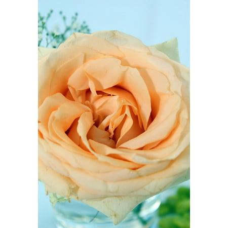 LAMINATED POSTER Rose Floral Arrangement Table Decoration Orange Poster Print 24 x 36 ()