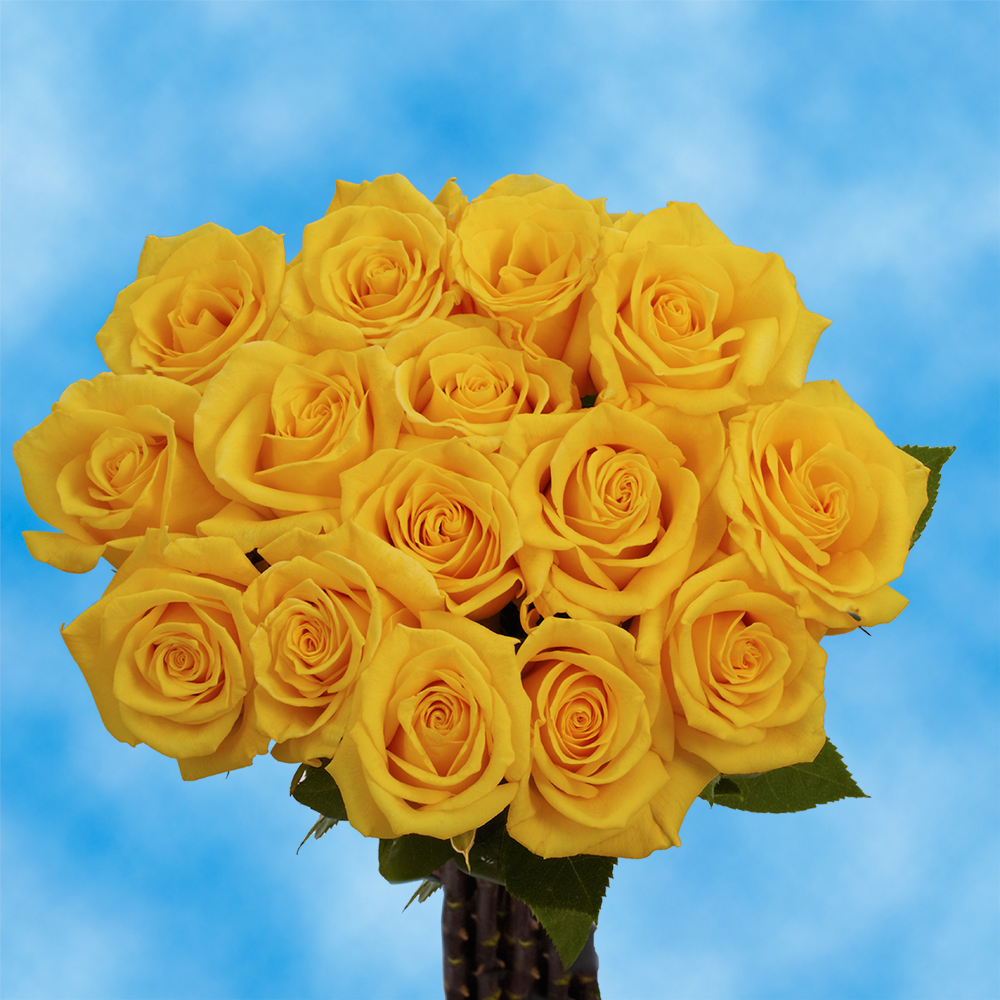 Globalrose 50 Fresh Cut Golden Yellow Roses Gold Star Roses
