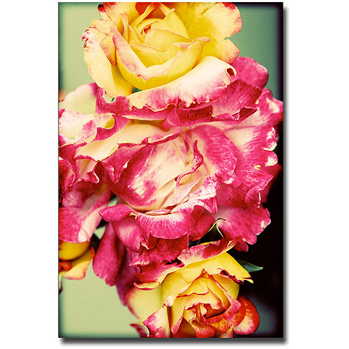 "Trademark Fine Art ""Rustic Roses"" Canvas Wall Art by Ariane Moshayedi"