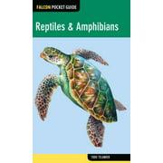 Reptiles & Amphibians - eBook