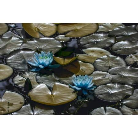 (Lillies Print Wall Art By #N/A #N/A)