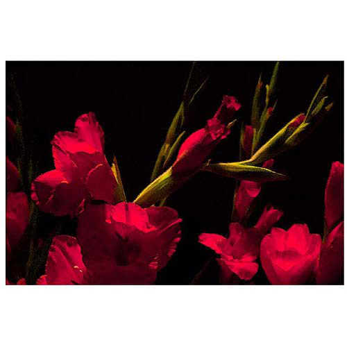 "Trademark Art ""Gladiolus II"" Canvas Art by Martha Guerra, 16x24"