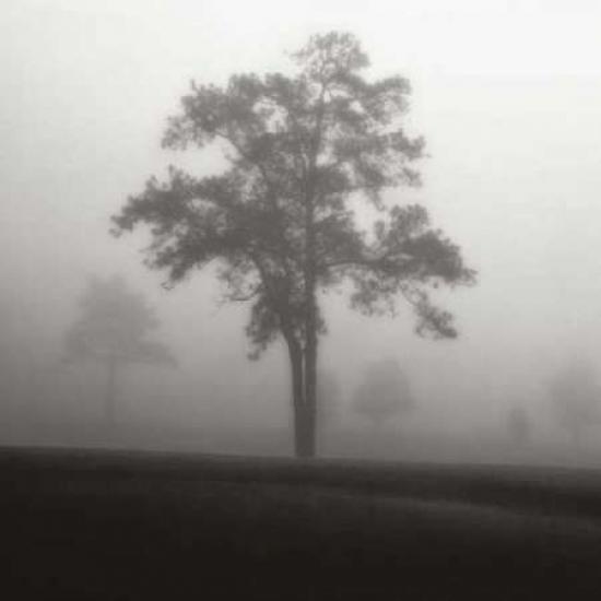 Posterazzi Fog Tree Study I Canvas Art - Jamie Cook (24 x 24)